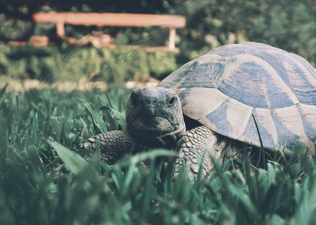 how to care for your tortoise